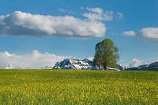 Wiosna gory